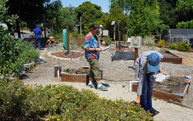 Los estudiantes se preparan para recoger artículos en el huerto.
