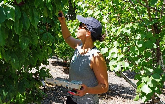 Christina Lawson, directora de nutrición en el Distrito Unificado Coast, se encontró algo Redondo en el huerto.