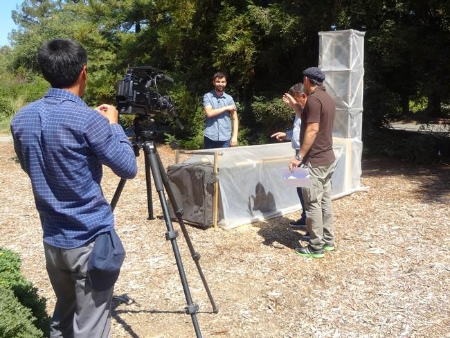 Esta semana, el Centro de Demostración del Laboratorio de Innovación Hortícola recibió la visita de un equipo de medios de comunicación de Tajikistan, a quien se ve aquí hablando con Angelos Deltsidis (centro), sobre el uso de secadoras solares para deshidratar chabacanos en Tajikistan. Fotografía por Khush Bakht Aalia para el Laboratorio de Innovación Hortícola.