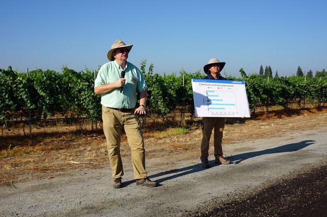 El especialista en nematología de UCCE, Andreas Westphal, se encuentra frente a un viñedo de uva Sauvignon Blanc donde se estudian tratamientos contra nematodos. El asesor de granjas UCCE, George Zhuang, sostiene una gráfica.