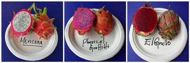 Las diferentes variedades de pitayas producen frutos que son blancos, rosados y un intenso rojo.