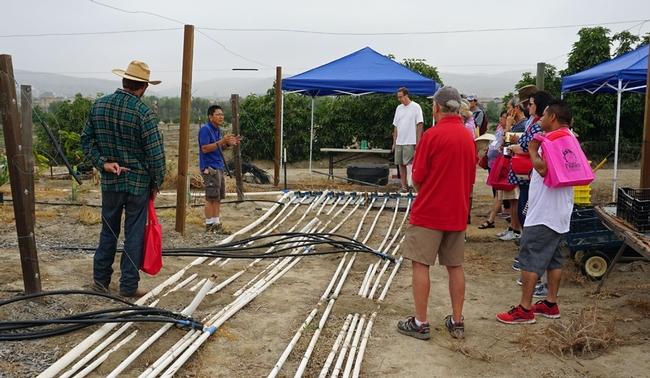 Gary Tanizaki, investigador asociado, explica sobre un sistema de riego que se está probando, el cual incluye seis regímenes diferentes de riego.