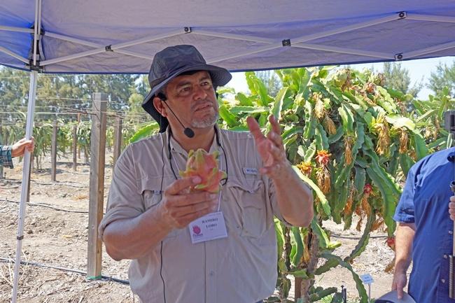 El asesor de UCCE para granjas pequeñas y líder de investigación sobre pitayas, Ramiro Lobo, muestra un fruto de la pitaya.