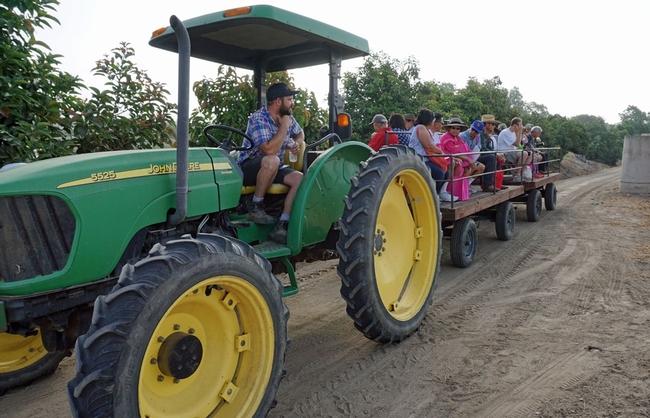Un tractor remolca a un grupo de participantes del Festival de la Pitaya hacia las parcelas de trabajo del Centro de Investigación y Extensión South Coast de la UC.