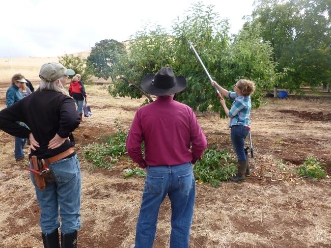 Los participantes de un taller observan prácticas de poda seguras para árboles frutales y nogales.