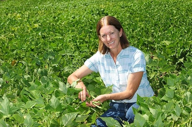 Rachel Long, asesora de granjas del condado de Yolo aparece en un campo de investigación de frijoles secos en la Universidad de California en Davis. (Fotografía: Kathy Keatley Garvey).