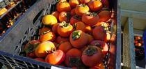 persimos for Blog de Alimentos Blog