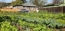 La agricultura urbana está tomando auge y UCCE ofrecerá una serie de talleres sobre el tema. for Blog de Alimentos Blog