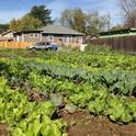 La agricultura urbana está tomando auge y UCCE ofrecerá una serie de talleres sobre el tema.