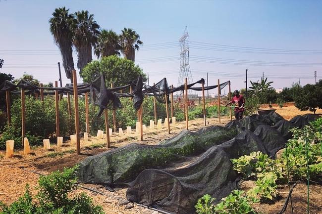 Los talleres sobre agricultura urbana se ofrecerán en las regiones de Sacramente y San Diego