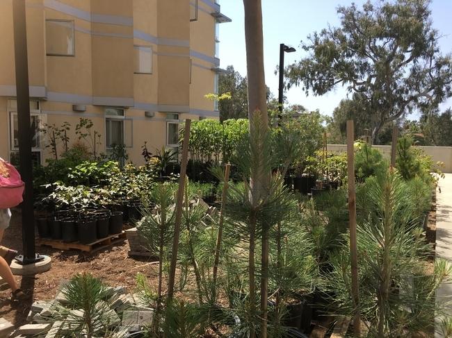 El trabajo en el Huerto de Ellie enseña prácticas sobre jardinería y sustentabilidad a estudiantes de UCSA, quienes cultivan alimentos y hierbas, a la vez que hacen composta con desechos de alimentos provenientes de los restaurantes del campus, creando un sistema alimentario sustentable de circuito cerrado dentro del campus.