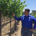 """Los costos de mano de obra son de siete centavos por parra en el manejo de un viñedo """"sin contacto"""", comparado con un dólar en un viñedo convencional, indicó Kaan Kurtural, especialista de Extensión Cooperativa de UC."""