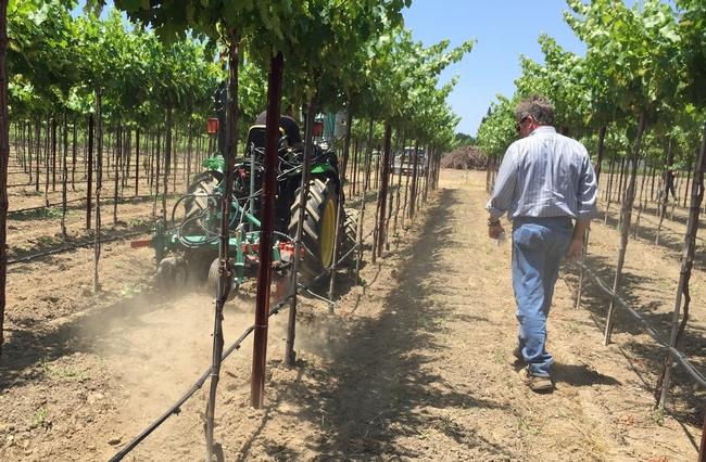"""Los cartones protegen a las parras jóvenes, pero el uso de """"herbicidas en parras de menos de tres años es un proyecto arriesgado"""", advirtió John Roncoroni."""