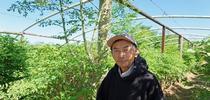 El granjero de Fresno Vang Thao aparece frente a su plantío de moringa. for Blog de Alimentos Blog
