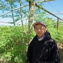 El granjero de Fresno Vang Thao aparece frente a su plantío de moringa.