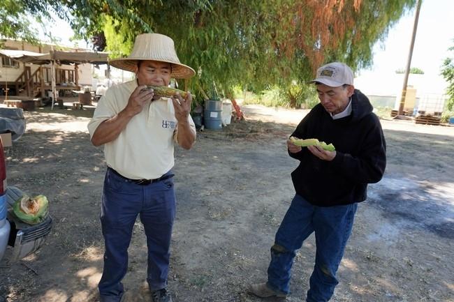 Michael Yang (izquierda), asistente agrícola de UCCE y Vang Thao disfrutan de un melón recién cosechado durante su visita al campo.