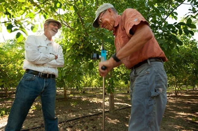 El profesor Ken Shackel y el especialista de Extensión Cooperativa de UC, Bruce Lampinen, prueban la cámara de presión en la nogalera de UC Davis.