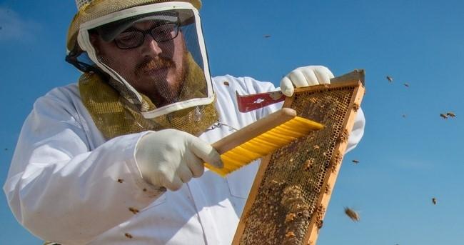 La industria apícola contribuye con más de 4,700 millones de dólares a la economía nacional