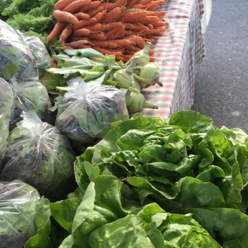 Los mercados de granjeros son fuentes esenciales de alimentos para la comunidad e importantes para promover la conexión social, la cual es especialmente necesaria hoy en día en los pueblos y condados pequeños.   Los mercados de granjeros están probando nuevos enfoques para mantener a los vendedores y clientes seguros en los mercados de granjeros. (Fotografía: Pamela Kan-Rice)