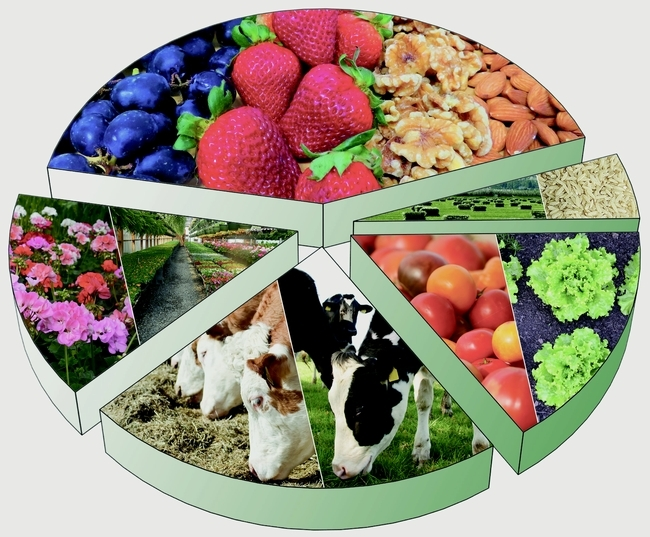 Un nuevo reporte examina el impacto de la pandemia en el sistema alimentario y lo que depara el futuro a las industrias ganadera, lechera, de frutas y verduras, fresas, tomates, nueces y vino de California.