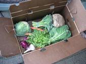 Los granjeros abastecen semanalmente a sus subscriptores con cajas de frutas y verduras frescas. (Fotografía: Ryan Galt)