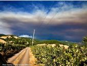 Grapes are particularly to smoke taint when growing close to a wildfire. (Photo: Facebook.com/CalFire)