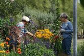 Since the UC Master Gardener program's inception, more than 5 million hours of volunteer service have been donated.