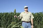 UCCE specialist Jeff Dahlberg studies sorghum at the UC Kearney Agricultural Research and Extension Center in Parlier.