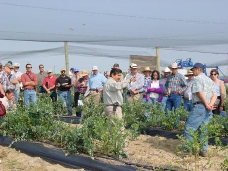 Manual Jimenez talks blueberries at the UC Kearney Agricultural Research and Extension Center last fall.