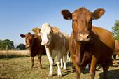 As a population's wealth rises, so does the demand for products produced in animal agriculture industries.