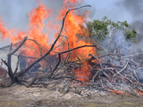 Ag burning contributes to air pollution.