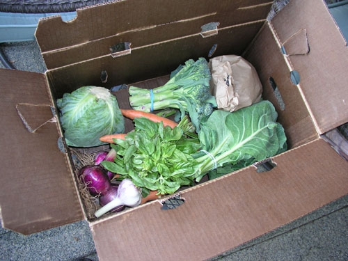 A box of vegetables prepared for a CSA subscriber. Multi-farm CSAs are a way to achieve incremental growth,