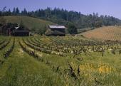 A scenic Sonoma County farm.