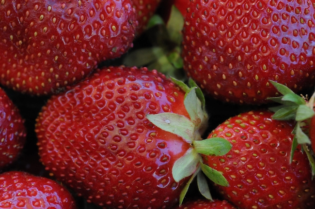 Close-up of ripe strawberries. Photo by Kathy Keatley Garvey.