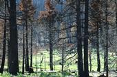 Tahoe Wildfire Awareness Week is May 26 - June 3.