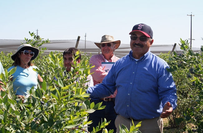 Manuel Jimenez leads a tour of the 15-year-old blueberry research plot.