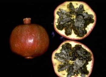 A pomegranate with black heart looks normal from the outside.