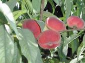 Saturn peaches are more expensive than traditional varieties.