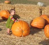San Joaquin County leads the state in pumpkin production.