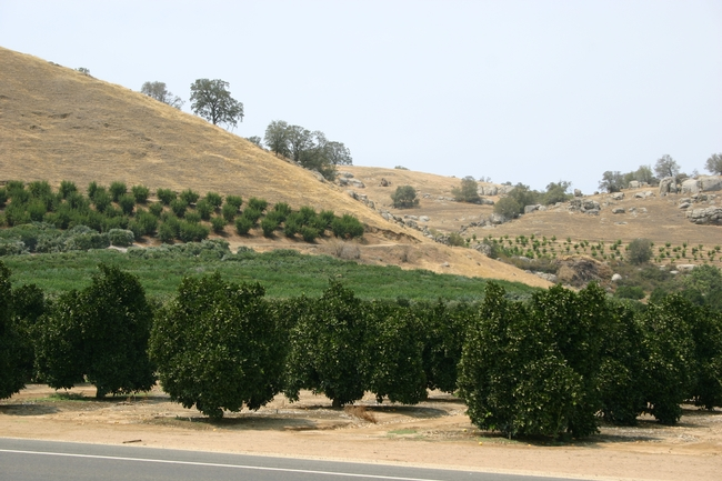 Some citrus orchards in Tulare County will have to comply with quarantine restrictions.