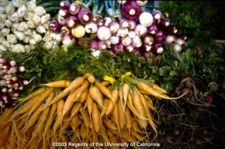 Urban gardens can produce thousands of pounds of produce.