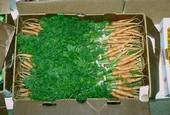 Experts look for specific flavor notes in carrots.
