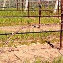 Warming temperatures in the spring and longer days stimulate dormant buds to swell and open - a process called