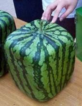 Square Melon