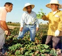 Richard Molinar, left, and Michael Yang, center, with farmer Ka Neng Vang.