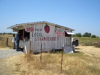 Sacramento strawberry stand.