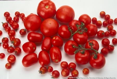 Dry farming tomatoes yields about 4 tons of fruit per acre; conventional growers may harvest 40 tons per acre.