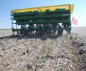 A crew transplants new crop in conservation agriculture system.