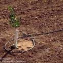 Using drip irrigation conserves water in agriculture.
