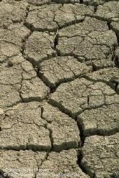 Drought gets attention from California media.